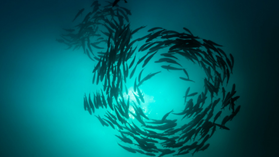 fish swimming