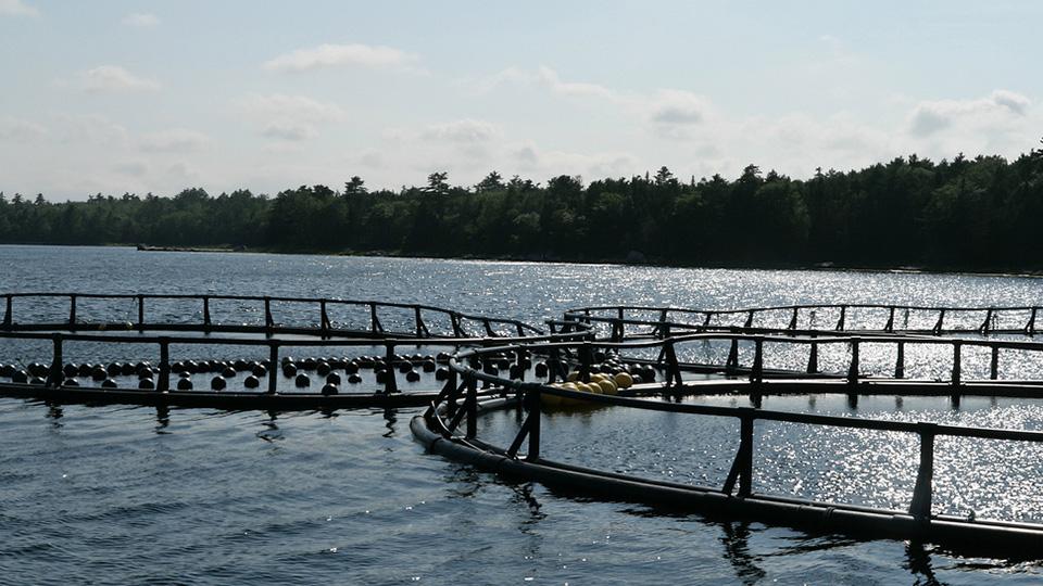 salmonfarm