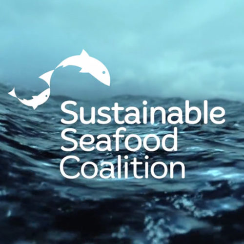 sustainable seafood coalition video